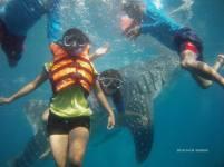 whale shark 2