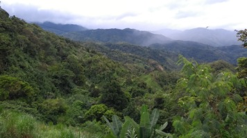 amazing green sceneries