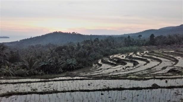 Sahara Rice Terraces